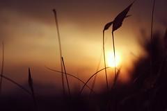 IMG_1663 (nchazarra) Tags: sunset sky orange sun sol cielo puesta naranja