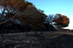DSC_0135 (saira_b) Tags: trees sunset beach pine evening nationalpark andalucia cadiz andalusia tarifa alandalus naturalpark lapena lapea campodegibraltar playadeloslances parquenaturaldelestrecho parajenaturalplayadeloslances