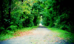 Whispers of fall (DHaug) Tags: trees green fall path ottawa september fujifilm canopy manotick xe1 2013 xf35mmf14r