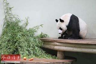 "BBC:""大熊猫外交""为中国软实力加分"
