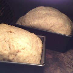 "I spent the afternoon writing a recipe for Thanksgiving dressing made with loaves of homemade bread. A bread baker can only do that for so long before getting down to business and making a batch of fresh bread! • <a style=""font-size:0.8em;"" href=""http://www.flickr.com/photos/54958436@N05/15217517114/"" target=""_blank"">View on Flickr</a>"