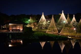 ✪白鳥庭園の雪吊り おもて面 -愛知県名古屋市-