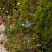 Trees_of_Loop_360_2014_059