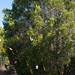 Trees_of_Loop_360_2014_114