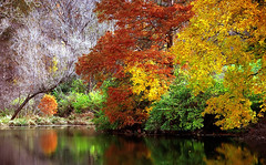 """Cincinnati – Spring Grove Cemetery & Arboretum """"Autumn Reflection"""" (David Paul Ohmer) Tags: ohio cincinnati spring grove cemetery arboretum springgrovecemetery gravesites burial grounds death spirit soul deceased graveyard conservatory victorian gothic revival national historic landmark adolph strauch cemetary autumn fall foliage tree leaves branches reflection lake pond water seasons color leaf leaflet"""