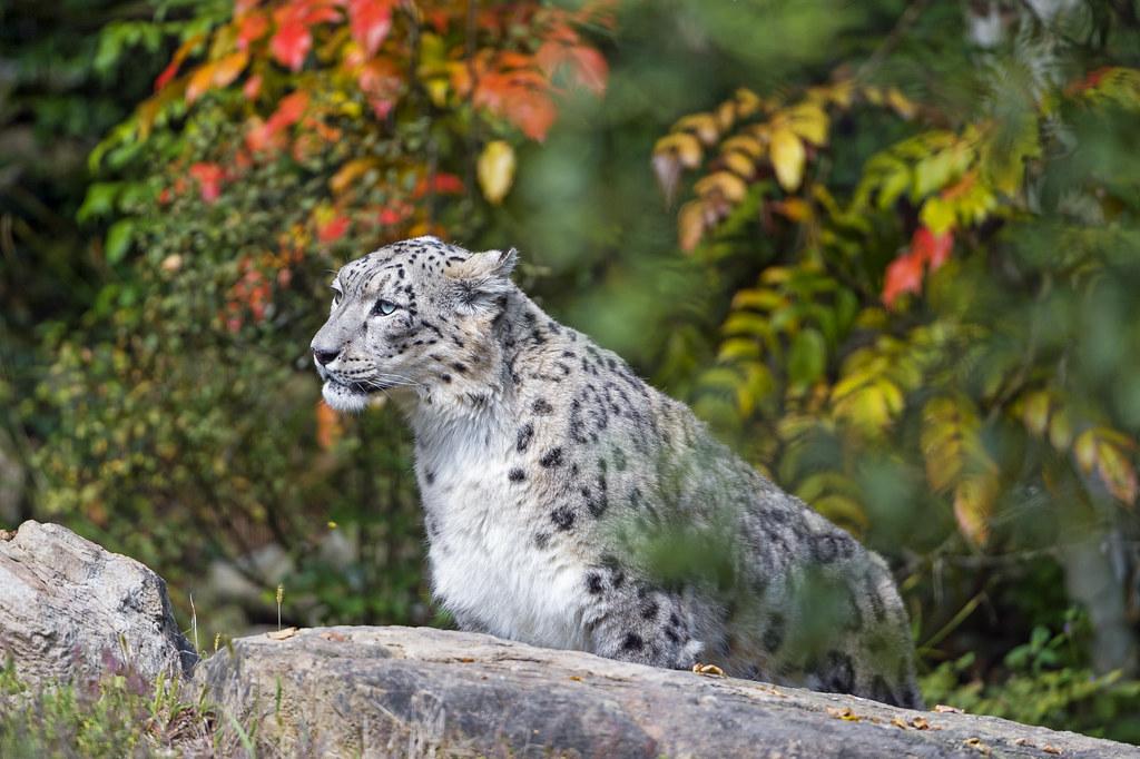 wildlife backgrounds related keywords - photo #5