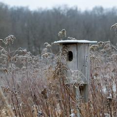 Room #15 (sdgiere) Tags: birdhouse 15 prairie dubuquecounty streambottom swissvalleynaturepreserve