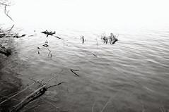 ZENTANGLES (UBU ♛) Tags: water blackwhite noiretblanc blues biancoenero bluacqua unamusicaintesta blusolitudine landscapeinblues bluubu luciombreepiccolicristalli ©ubu
