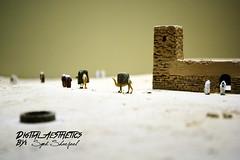 _DSC5181 (Syed Sharjeel) Tags: ancient desert camel arab