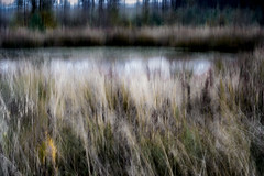 Dark Pool (gerainte1) Tags: wood trees pool forest reeds landscape icm intentionalcameramovement autumnq