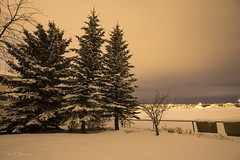 Mrs Winter is here to stay (Una S) Tags: trees winter snow canada cold calgary night clouds fence ab