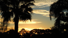 November 12th sunrise (Jim Mullhaupt) Tags: morning blue wallpaper sky orange sun color tree weather silhouette yellow clouds sunrise palms landscape dawn nikon florida coolpix oaks bradenton p510 mullhaupt jimmullhaupt