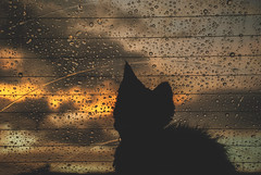 Theo Hotel (Exchizo) Tags: sunset car rain cat de chuva gato fim carro tarde felina silhueta