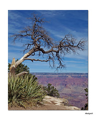 Living on the Edge. (Harleynik Rides Again.) Tags: sky usa tree landscape rocks grandcanyon roadtrip 2009 copyrightharleynik