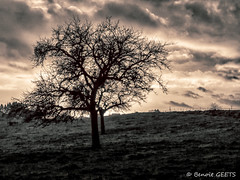 Trees (misterblue66) Tags: d3200 trees tree arbre bn bw noiretblanc hdr sombre ciel nuage nuageux virton coucherdesoleil nikon geets benoitgeets misterblue himmel sky