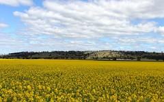 Yallambee Rd, Cassilis NSW