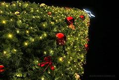 FELIZ NAVIDAD 2014 (Pablo C.M || BANCOIMAGENES.CL) Tags: chile christmas santiago navidad merrychristmas feliznavidad2014