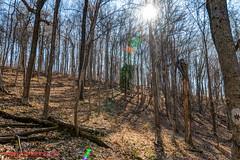 Warner Parks Walkabout - January 17, 2014 (mikerhicks) Tags: winter usa geotagged unitedstates nashville hiking tennessee percywarnerpark warnerparks vaughnsgap canon7dmkii sigma18250mmf3563dcmacrooshsm geo:lat=3607887500 geo:lon=8688015333