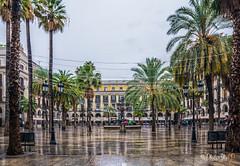 Plaça Reial / Plaza Real, Barcelona 8598