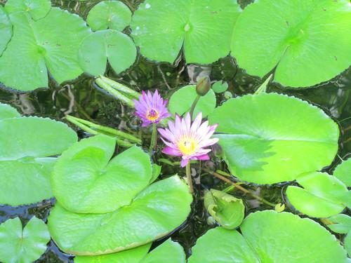 Garden Chiang Mai, Thailand
