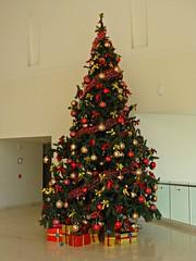 Feliz Navidad en Oaxaca (knightbefore_99) Tags: west tree green art mexico navidad coast sunny playa noel mexican oaxaca tropical fir feliz secrets huatulco