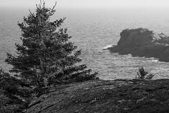 Gull Rock from Burnt Head, cliff, Monhegan, Maine, Nikon D40, 5.16.14 (steve aimone) Tags: ocean from sea blackandwhite seascape monochrome landscape head maine monochromatic atlantic burnt lookingdown monhegan seacoast monheganisland gullrock primelens nikond40 nikonprime