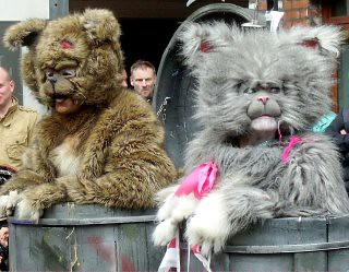 Festival of fools Cat Litter