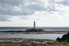 St Marys lighthouse at low tide (DavidWF2009) Tags: sea rocks northumberland stmaryslighthouse seatonsluice