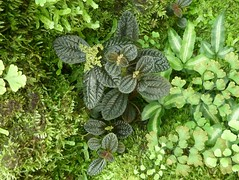 Chicago, Garfield Park Conservatory, Fern Room, Plant Medley (Mary Warren (6.7+ Million Views)) Tags: plants chicago green nature leaves moss flora foliage garfieldparkconservatory