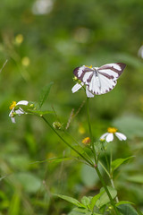 Keelung, Taiwan _IMG_8524 (Len) Tags: macro butterfly   keelung   6d 70300   ef70300mmf456isusm   talbotianaganum  karumii