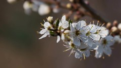 Spring Blooms 2016 (WendyCoops224) Tags: flowers canon eos spring blossom slideshow springwatch 70d wendycooper