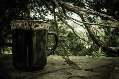 #233 of 365 days - Cozy Morning (Ruadh Sionnach) Tags: morning naturaleza tree nature coffee caf stone wall pine cozy branch natural tea farm branches natureza naturallight mug caneca rancho fazenda ch pinheiro acolhedor