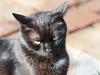 Wiosna Frühling Spring (arjuna_zbycho) Tags: pet cats pets cute animal animals cat blackcat spring kitten feline chat kitty kittens tuxedo gato tuxedocat gatto katzen haustier kater tier frühling wiosna gattini hauskatze kocio