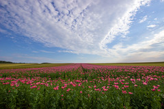 poppy field (Jules Marco) Tags: summer sky field clouds canon landscape austria countryside sterreich outdoor sommer horizon feld himmel wolken poppy landschaft niedersterreich horizont waldviertel mohn loweraustria woodquarter sigma1020mmf35exdchsm eos600d