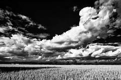 Space for Clouds and Thoughts... (Ody on the mount) Tags: bw monochrome de deutschland licht felder himmel wolken sw landschaft tbingen badenwrttemberg schwbischealb fototour gespiegelt anlsse