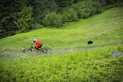 Whistler Bike Park (GoWhistler) Tags: bear canada animal whistler fantastic bc wildlife scenic downhill dh biking mtb blackbear whistlerbikepark michaelsousa