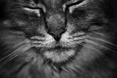 Within the balance (Mateo Franco) Tags: gatos mascotas portrait retrato d5200 blackandwhite blancoynegro