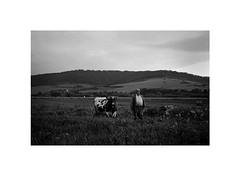 slovak cowboy (Marek Pupk) Tags: leica blackandwhite bw monochrome cowboy europe central documentary rangefinder land slovakia ilford