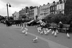 Feeding Time (Crisp-13) Tags: seagulls white black monochrome bench kent seaside broadstairs