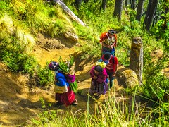 Another group of Mayan women climbing to the summit.