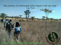 The journey of a thousand miles begins with one step - Lao Tzu #zambia #agriculture #farming #innovation #social #enterprise #poultry #aquaculture #smallholder #international #development #mkushi #humanity (humanity4frica) Tags: poultry international enterprise humanity agriculture zambia social innovation smallholder development aquaculture farming mkushi