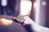 The aventures of Boxy (céline._.photographie) Tags: danbo danboard japanese figure amazon cute amazing photo photography photographie photographer nikon nikond600 passion 18 50mm intérieur profondeur de champs