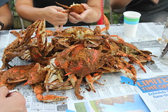 IMG_7005.JPG (TimStClair) Tags: crab crabfeast crabpicking steamedcrab bluecrab maryland baltimore