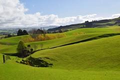 Rural New Zealand (Gadgetman@Nikon) Tags: elements arnocanterburynewzealand ruralnewzealand landscape magnificent green rollinghills spring farm rural nikon nikond3300 nikon35mm inviting interesting mostinteresting meechin flickrtoday trees bushes fenceline fence sheep