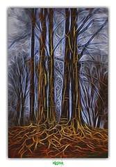 BLOOD & VEINS // DU SANG, DES VEINES... (rgisa) Tags: blood vein root tree arbre veine sang racine clres seinemaritime noramndie