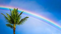 rainbow (deankira) Tags: hawaii rainbow waikiki sonyalpha a6000 sigmaart