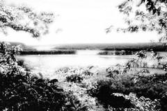 old man river (Mark.Swanson) Tags: statepark trees river island illinois mississippiriver savanna mississippipalisades