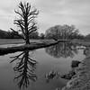The River Bulbourne (Shen_Stone) Tags: leica trees 2 england bw monochrome rivers hertfordshire digilux bulbourne shenstone