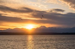 Sunset over the Olympic Mountains (.:oneiroi:.) Tags: seattle sunset sea washington nikon pugetsound olympic d5200 uploaded:by=flickrmobile flickriosapp:filter=nofilter