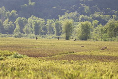 _MG_0388 (liem.ionetour) Tags: travel beautiful landscape nice asia tour du vietnam tay viet mai re gia dep sapa nam bac chau ione maichau dulich mocchau taybac hapdan ionetour